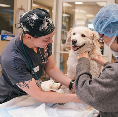 About Our Animal Hospital in Colorado Springs, CO: a dog getting an exam